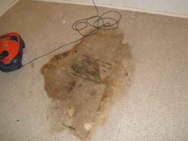 Carpet Stain Removal Carpet Stains Carpet Spots Melbourne