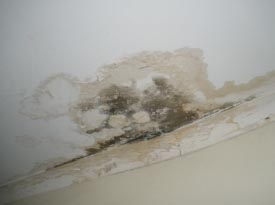Mould Mold Mildew Removal Cleaning Melbourne
